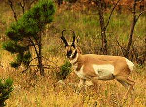 ANPAT-15-Wildlife_300.jpg