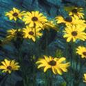 Academy-SQ-Acadia-Flowers_125.jpg