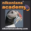Academy-SQ-Iceland-Bird_110.jpg