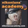 Academy-SQ-Monkey_110.jpg