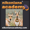 Academy-SQ-pronghorn_125.jpg