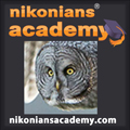 Academy-Teton-Owl-SQ_120.jpg