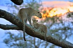 Africa-Hagen.jpg