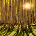 Anpat-13-Flagstaff_Woods_125.jpg