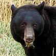Bear_SQ_ANPAT16_110.jpg