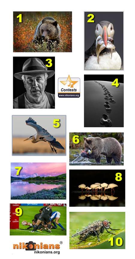 Best-Contest-Nikonians-2015_450.jpg