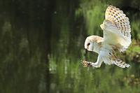 BirdsOfPrey2.jpg