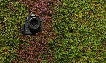 Bushes-Camera.jpg