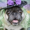 Digital-Art-SQ-Dog-Halloween_110.jpg