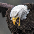 Eagles-Contest-April-2016-SQ_110.jpg