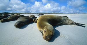 Galapagos-Tony-Karalsony4-024.jpg