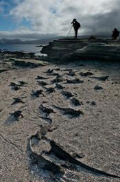 Galapagos_2014_175.jpg
