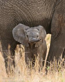 Hagen--small-elephant_225.jpg