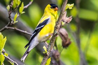 NEF-forum-Bird_325.jpg