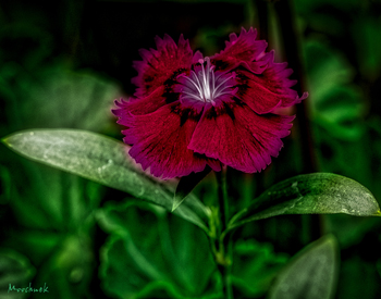 Online-assign-10May2106_350.jpg