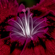 Online-assign-10May2106_SQ_110.jpg