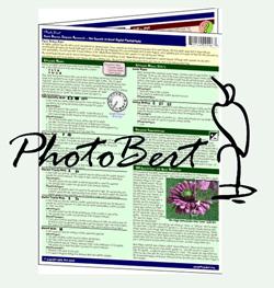 Photo-Bert_250.jpg