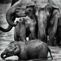 Sri Lanka Les2.jpg