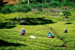 Sri-Lanka-Les_6.jpg