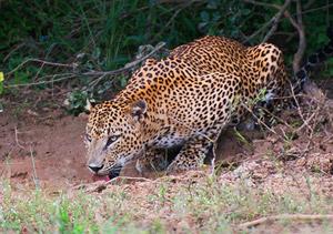 SriLanka_300.jpg