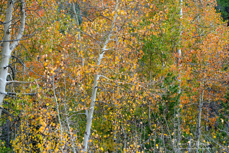 20181114_144731_1-fall_color_hwy_395_connie-cassinetto_800.jpg