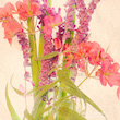 20180403_105022_-1-mixed_flowers_first_attempt_cassinetto_110px.jpg