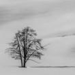 topper1946-tree21-110.jpg