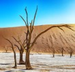 images.nikonians.org_galleries_data_500_5001178_Deadvlei_nik_balanced_filter-110.jpg