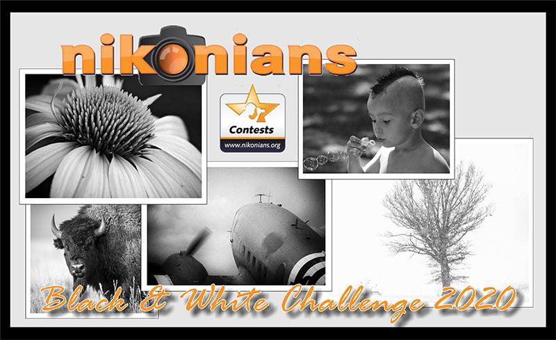 black-white-challange-2020-800px.jpg