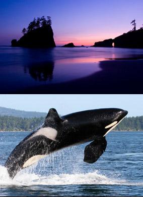 comp_lake-orca_284px.jpg