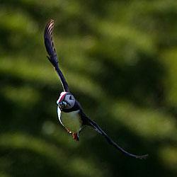 coverphoto_birds.jpg