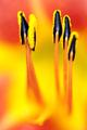 Flowers_DSC8199_022-kl.jpg