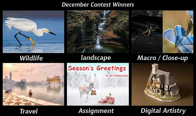dec-contests800px.JPG