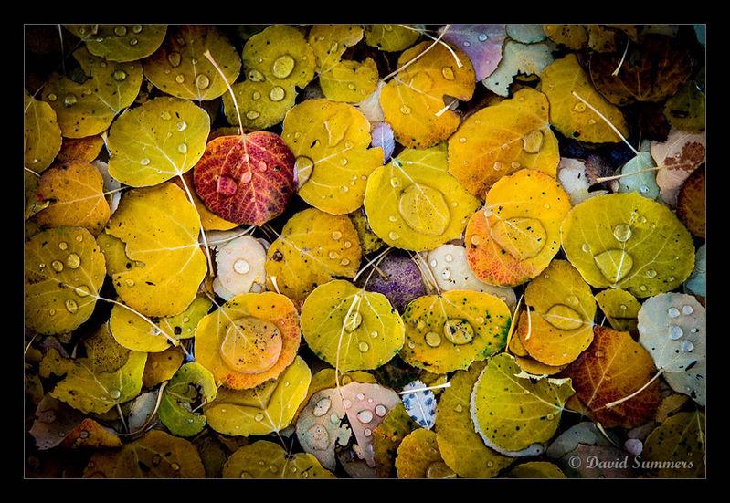 fall-anpat18-800.jpg