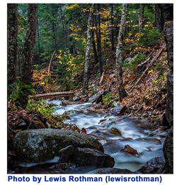 forest-stream-lewisrothman.jpg