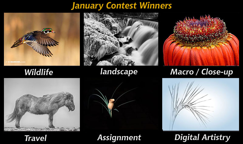 jan-contests800px.JPG