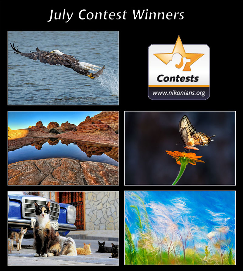 july19-winners-800px.jpg