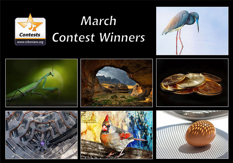 march2020winners-800px.jpg