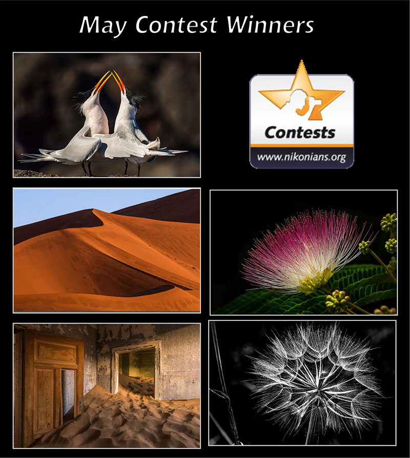 may2019-winners1-800px.jpg