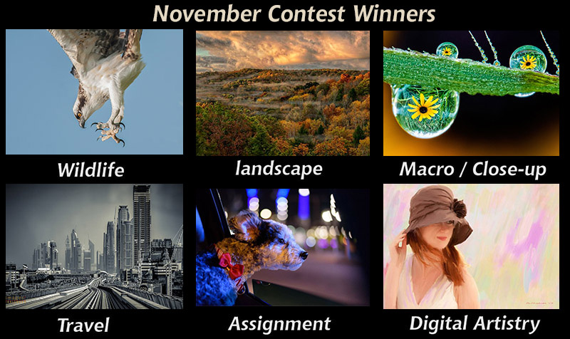 november winners-800px.jpg