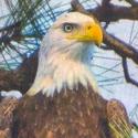 vladIT-eagle_125.jpg