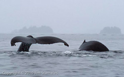 whales_250.jpg